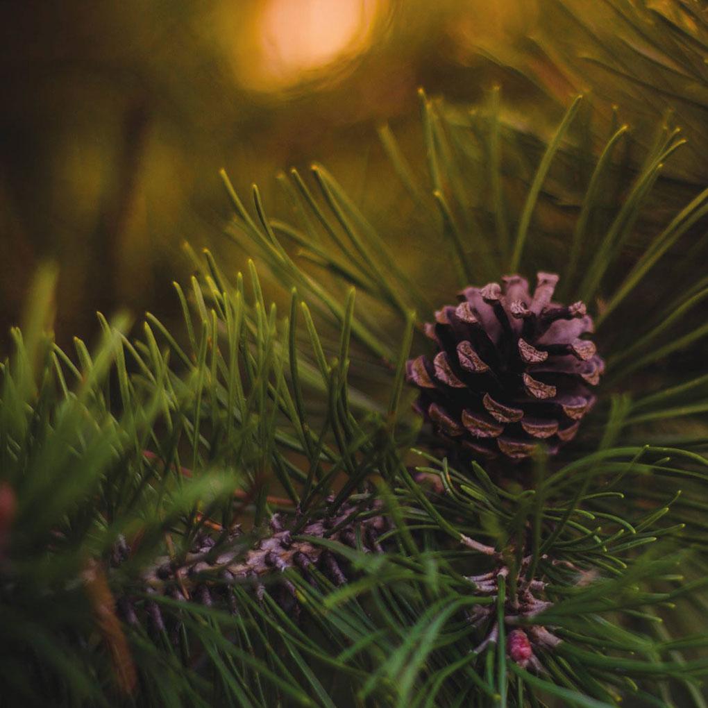 Weihnachtsbaumverkauf Betragsbild